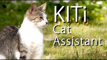 KITi The Virtual Cat Assistant – PARODY