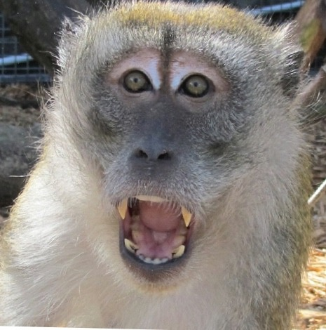 Magic Macaque