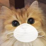 MeowDax