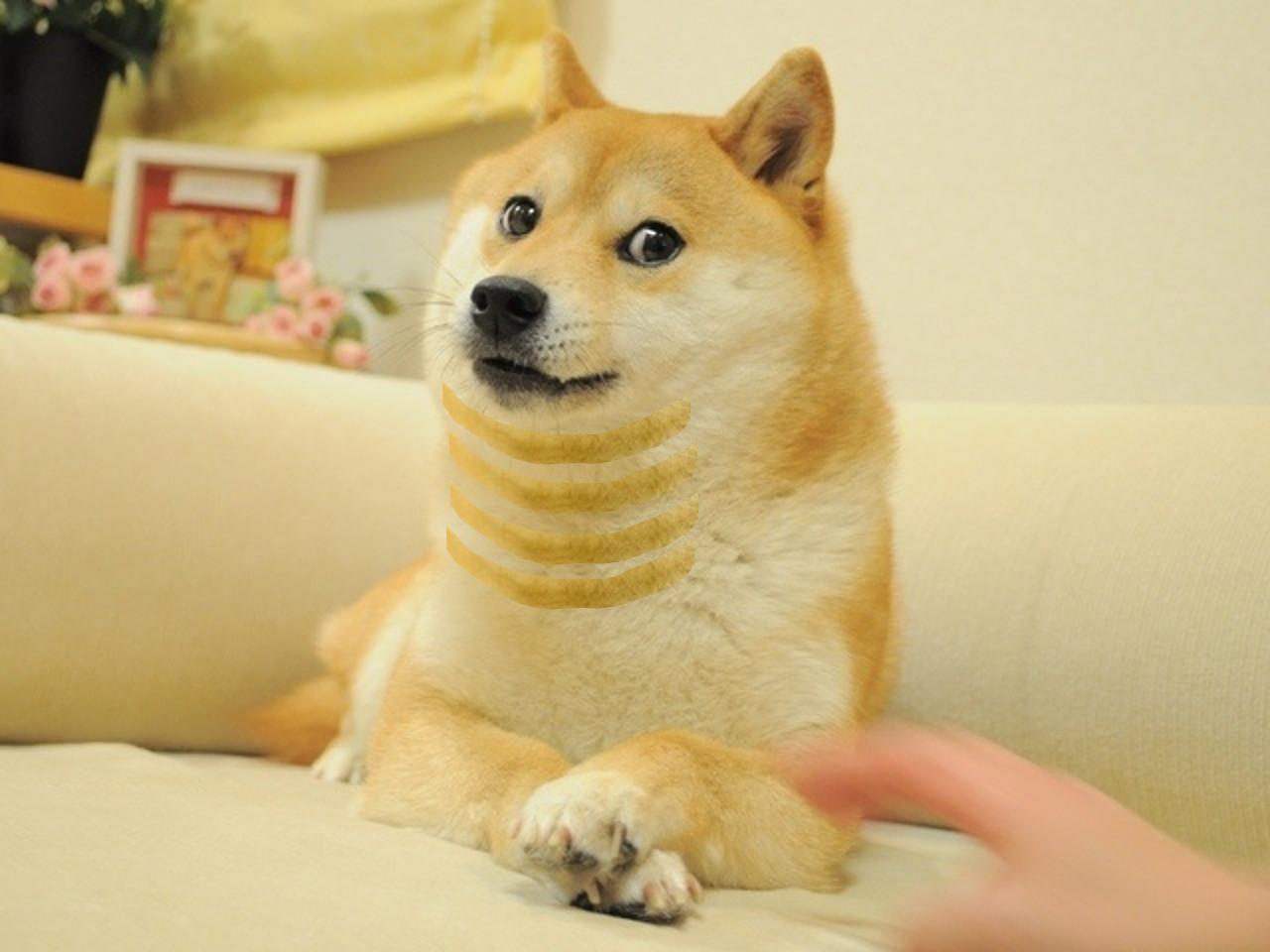 doge chin