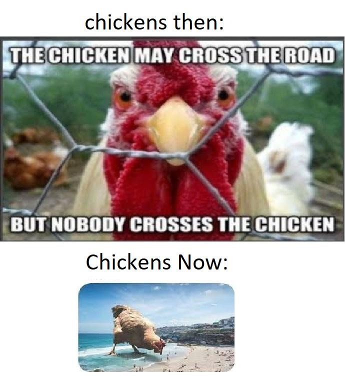 Chickens Then vs Chickens Now